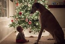 Christmas photography ideas / - Inspiration for Christmas photo shoot -