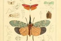 nature illustrations / botanical and zoological illustrations