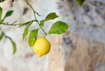 Les bienfaits du citron / Quand la vie nous donne des citrons .... découvrez les nombreux bienfaits de ces fruits à la belle couleur dorée ...