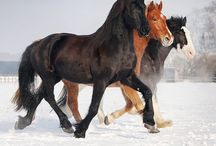 Pferde / Pferde