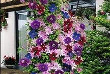 How Does Your Garden Grow ? .♥.•*¨`*•♫.•´*.¸.•´♥ ~ `*.¸.* ¤.❦∕̆̃̃✿