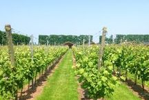 Wineries - Netherlands / Thanks to new hybrid grape varieties and a slight climate change, the number of wineries in the Netherlands is slowly increasing. And so does the quality of their cool climate wines!