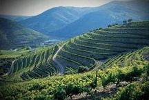 Wineries - Portugal / Portugal has a big grape variety of local kinds, producing a very wide variety of different wines. Famous region is the Douro Valley, home of Port wine.