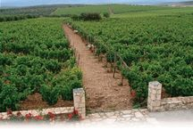 Wineries - Greece / Old world... the origins of winemaking in Greece go back 6500 years. Naoussa and Nemea are a.o. well known wine regions, but you find also many wineries on the islands.