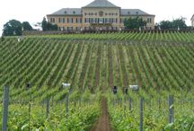 Wineries - Germany / Most German wines are produced in the western part. White wines dominate the industry but due to domestic demand also more red wines are produced.