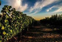 Wineries - Argentina / One of the larger wine producers in the world, Argentina is known for it's excellent Malbec and Torrontés wines, but has much more to offer!