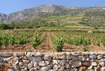 Wineries - Croatia / Another old world wine producer is Croatia, with a majority of white wines and many traditional grape varieties still surviving.