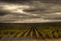 Wineries - Turkey