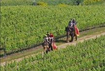 Wineries - Thailand