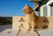 Winery cats - Worldwide / Winery dogs are a familiar sight, but let's not forget those furry winery cats!