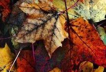 art of leaves