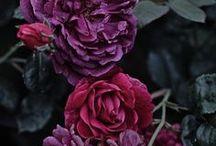 Blumen / Flowers / Schöne Blumen und Florales  Beautiful Flowers and Florals