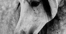 Tiere /Animal spirits / there is a spirit and soul in each animal