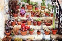 Pflanzen / Plants / Aus Liebe zu Pflanzen Pflanzen als Dekoration  For the love of plants Plants as decoration