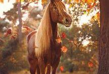 Herbst / Autumn Fall