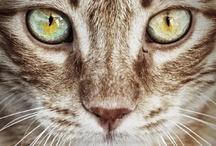 Here Kitty Kitty / by Magen Fletcher