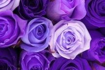 PRETTY PURPLE THINGS / All Things that are the color PURPLE :)