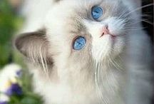 Cute Cats / Cutest Cats you will ever see! #adorable #cats