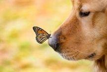 Animals / by Brea Swierk