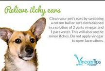 Pet Problem Solvers / Ways to clean up your pooch or clean up after him!