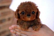Irresistibly cute