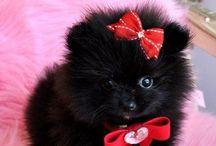 Black & fluffy