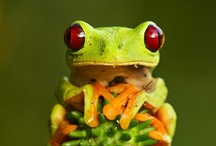 Animals! / Animales! / I love frogs!! / by Charo Toro