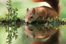 Reflections  - - -  snoitcelfeR / by Gerrie Pasmans