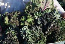 Organic Veggie Benefits