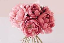 blooms / #bloom #blooms #flowers #wedding #colorful