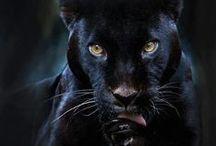Strictly Black