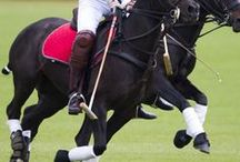 Polo in Play / Polo: a well-known game that few know anything about