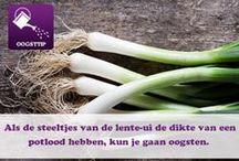 Tips voor het houden en onderhouden van vers / Tips voor het houden en onderhouden van vers #moestuin #kruiden #vers #groenten #fruit
