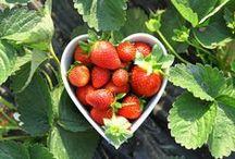 Aardbeien / Aardbeien