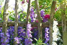 Tuinideeen / Ideeen voor onze vlindertuin