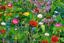 GARDEN / Audrey Hepburn: ´To plant a garden is to believe in tomorrow.´