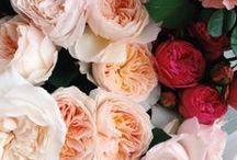 {- Flower Power!}