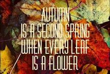 Autumn is coming / Appreciation for my favourite season!
