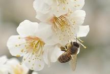 bees and honey... 415 / by Patricia Rinaldi