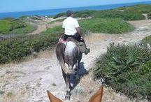 Vivi la tua esperienza a Cavallo in Sardegna