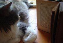 Libros - Books / Tapas de libros - Books covers