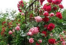 red pink garden