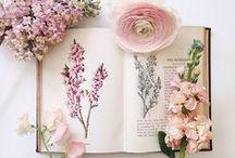 Flow  | Fleurs / Il y a des fleurs partout pour qui veut bien les voir, comme le disait Henri Matisse