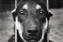 ADOPT do not BUY, adopt is terrific!!!! / by Adriana Briones