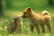 Cats and Dogs / by Shirleen Goh