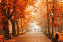 Autumn ❤ / by Shirleen Goh