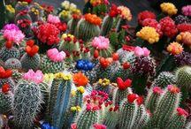 Cactus / by ayako Nagata