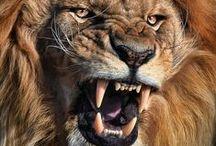 Referências - Reino Animal / Belos exemplares de diversas espécies de animais para usar como referências de desenho.