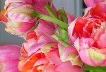 Bloemen / bloemen, struiken, kleuren