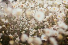 flowers & plants / I love GREEN